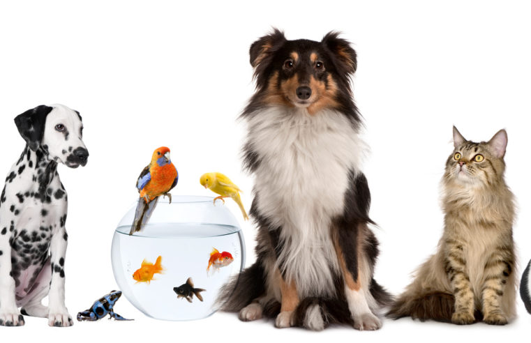 four Pet Insurance coverage Secrets and techniques – Issues They Do not Need You to Know