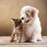 Frequently Asked Questions for Pet Insurance