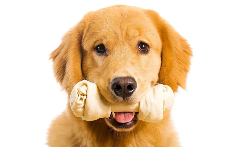 Pet Insurance coverage Ideas Pet Homeowners Ought to Know