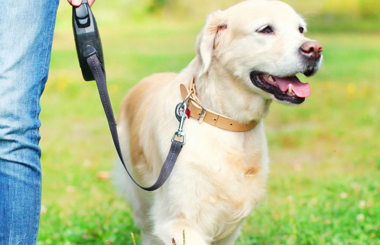 Pet Insurance coverage and the Which means of Coverage Phrases
